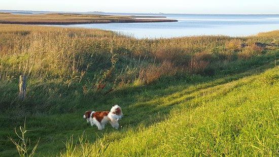 Nakskov, Denmark: Anton, lejrchefen Jens' hund, på morgenvandring ved Søndennor.