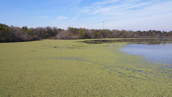 Sugar Land, TX: Water view