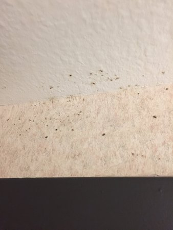 Hampton Inn St. Augustine - I-95: mold on ceiling and wall