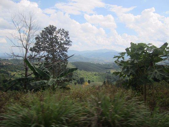 Doi Mae Salong: Verdant hilly countryside.