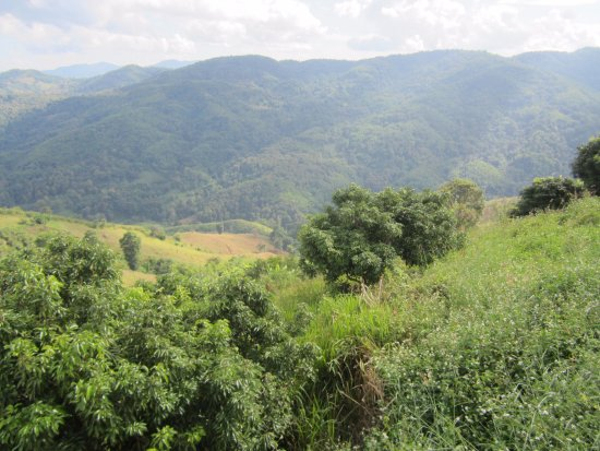 Doi Mae Salong: Jungle clad hills are all around.