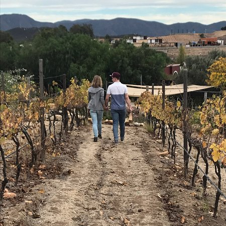 Valle de Guadalupe, Mexico: My nephew and GF soaking in the knowledge from the staff. Then soaking in the magic from the vin