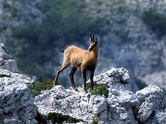Cortina D'Ampezzo, Italia: Un'improvvisa apparizione...