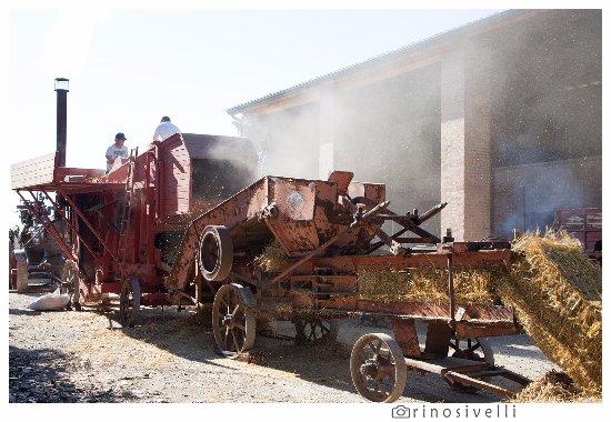 Alseno, Itália: La storia della meccanizzazione agricola: trebbiatura del grano.