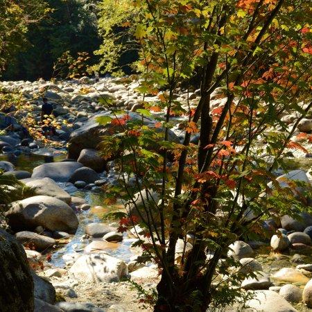 Lynn Canyon Park: photo2.jpg