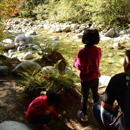 Lynn Canyon Park: photo4.jpg