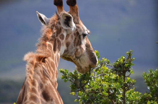 Grahamstown, Güney Afrika: photo2.jpg