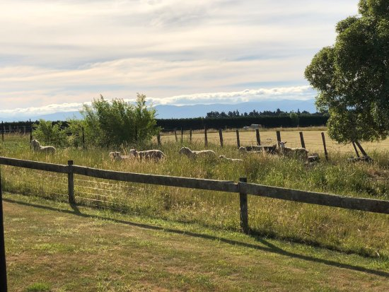 Martinborough, Neuseeland: Directly out the back door
