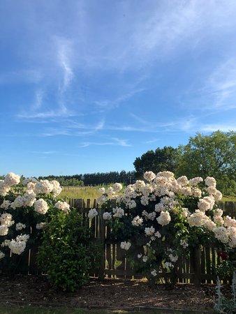 Martinborough, Nueva Zelanda: View from side of house