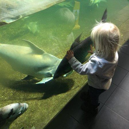 Aquarium: photo0.jpg