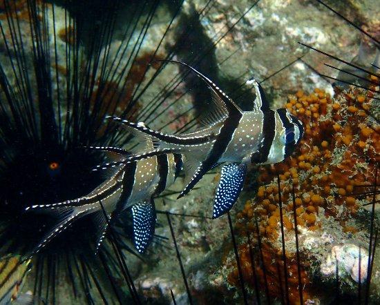 Biorock Pemuteran bali - Menyelam