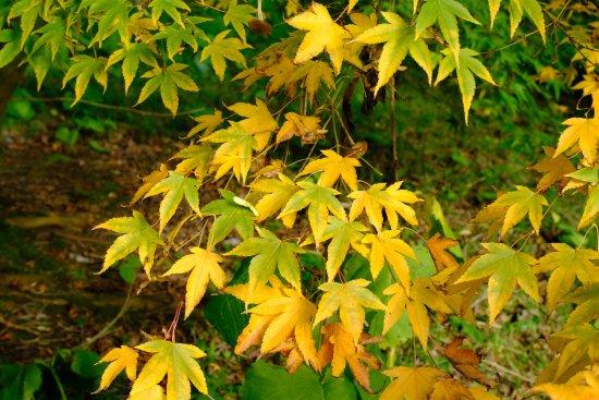 Batsford Arboretum: Autumn colour at Batsford