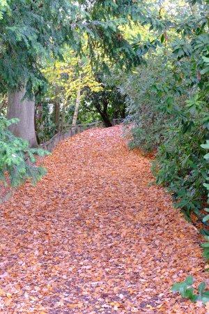Lamberhurst, UK: Autumn colour