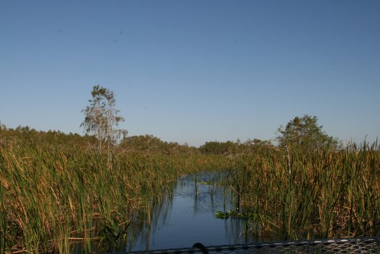 Down South Airboat Tours: Flying over the water and reeds