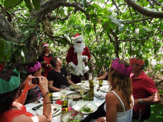 hannaford sachs christmas day inside the enchanted fig tree even santa comes to - Hannaford Christmas Hours