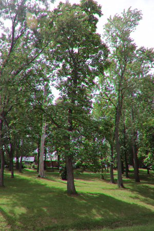 St. Catharines, Καναδάς: Nice trees!