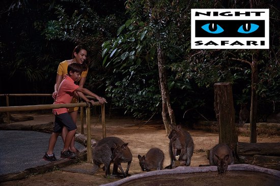 ‪Night Safari Wallaby Trail‬