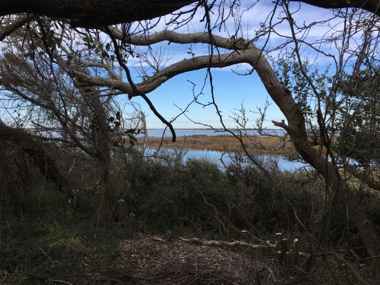 Hatteras Island, NC: trail view in tree area