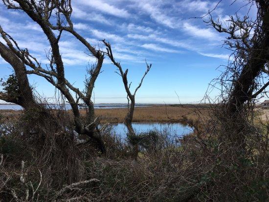 Hatteras Island, NC: trail view four