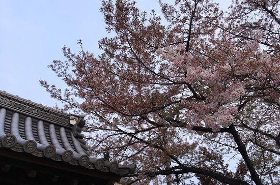 Private Cherry Blossoms in Takayama ...