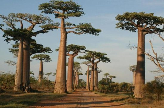 5 Day Tour Baobab Avenue Express from