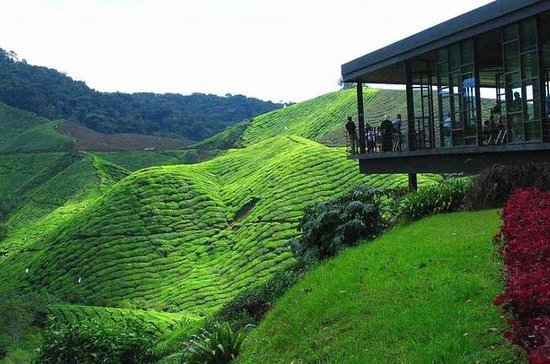 Cameron Highland Day Tour Private