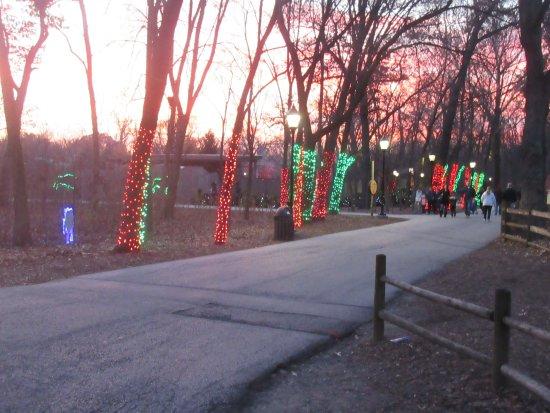 Brookfield Zoo: Lights On Trees