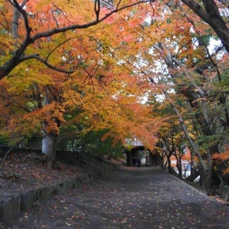 Tokushima, Japan: photo1.jpg