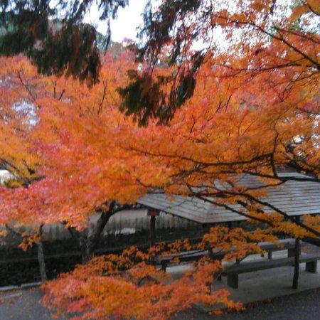 Tokushima, Japan: photo2.jpg