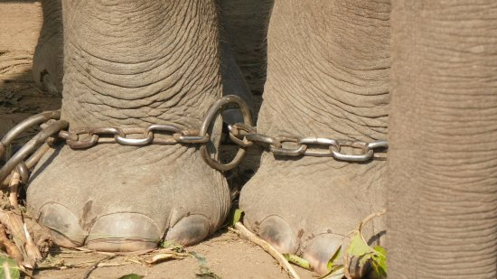 Mahakali Zone, Nepal: Here's the shackled that bound the elephants.
