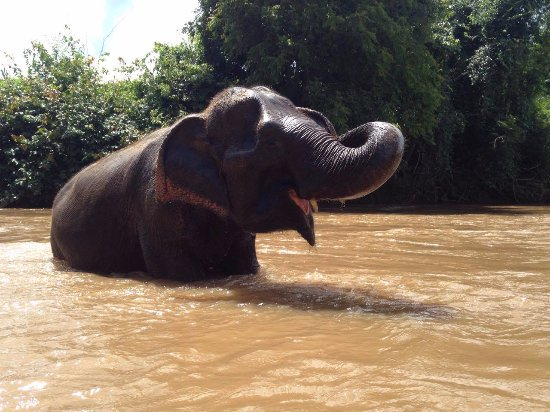 Mae Chaem, Thailandia: Observe the elephants enjoying just being elephants