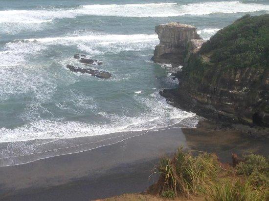 Muriwai Beach, New Zealand: Muriwai Gannet Colony