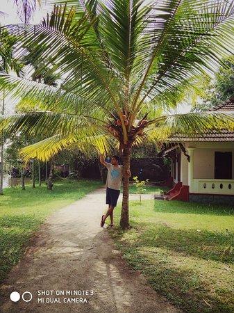 Palmgrove Lake Resort: IMG_20171118_130218_large.jpg