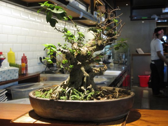 Pohon Bonsai Mini Picture Of Rayjin Seminyak Tripadvisor