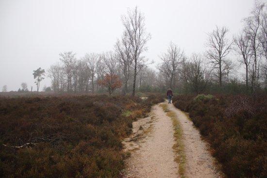 Holten, Países Bajos: Prachtige omgeving