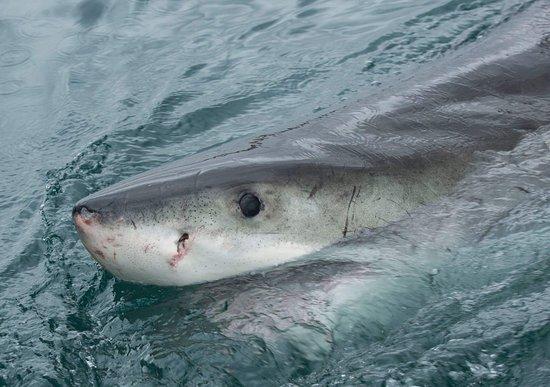 Mossel Bay, South Africa: FB_IMG_1512480524839_large.jpg