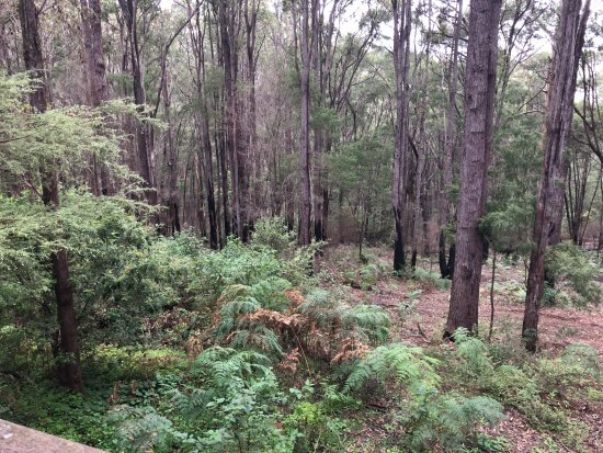 Pemberton, Australia: View of the forest