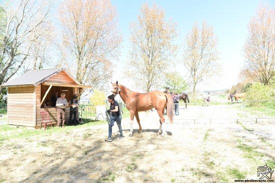 Le Touquet, Francia: visite vétérinaire