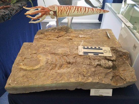 Murfreesboro, TN: Nautiloid fossil and sculpture