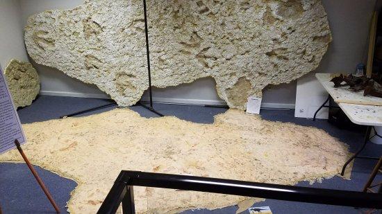 Murfreesboro, TN: Dinosaur footprints, cast and mold