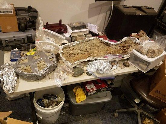 Murfreesboro, TN: Dinosaur bones in Paleo lab