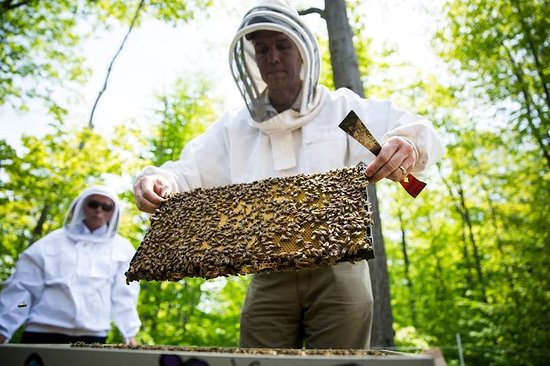 Parry Sound and Area Community Apiary