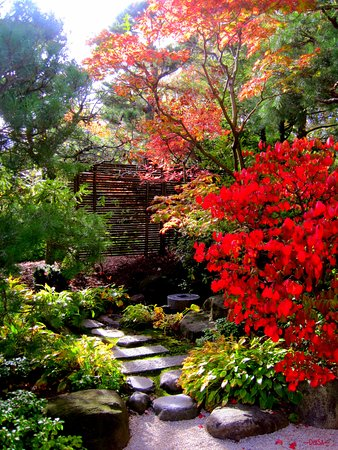 Anderson Japanese Gardens: Beautiful color in the Pond Strolling Garden