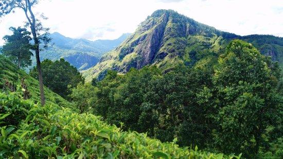 Beruwala, Sri Lanka: Элла Рок