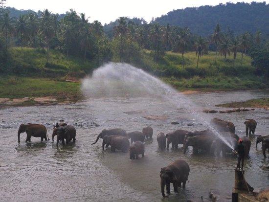 Beruwala, Sri Lanka: Пиннавела