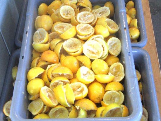 Rutherford, كاليفورنيا: Lemons Squeezed for Lemon Olive Oil, Round Pond Estate, Napa Valley