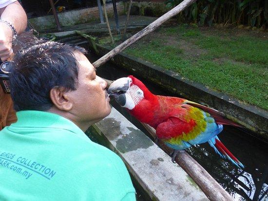 Perai, Malaysia: Der Tierpfleger und sein Liebling