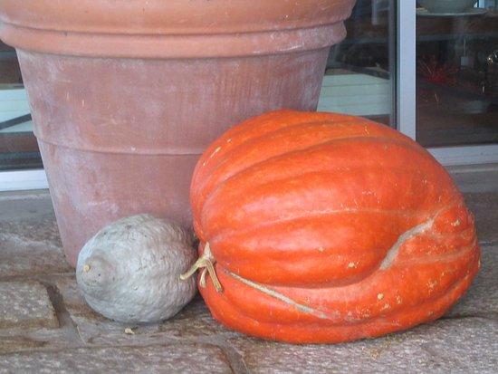 Large Pumpkin, Round Pond Estate, Napa, CA