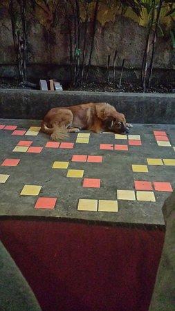 NapPark Hostel @ Khao San: Resident dog.