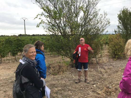 Alzonne, Francia: Our guide, the owner, explaining what helps growing grapes.
